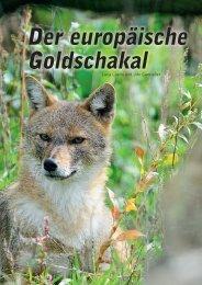 Der europäische Goldschakal - Goldenjackal.eu