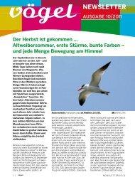 Newsletter 10/11 Beobachtungen und Beobachtungstipps im Oktober