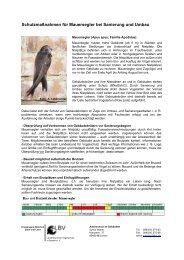 Schutzmaßnahmen für Mauersegler bei Sanierung und Umbau