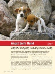 Angst beim Hund – Angstbewältigung - Schweizer Hunde Magazin