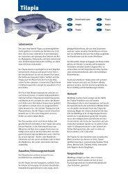 Tilapia - Fisch