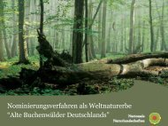 Alte Buchenwälder Deutschlands - NNA