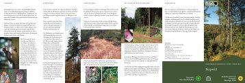 Bergwald - Biosphärenreservat Vessertal-Thüringer Wald