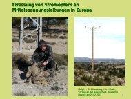 Gänsegeier - Naturschutz-Akademie Hessen