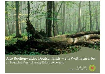 Alte Buchenwälder Deutschlands – ein Weltnaturerbe - Deutscher ...