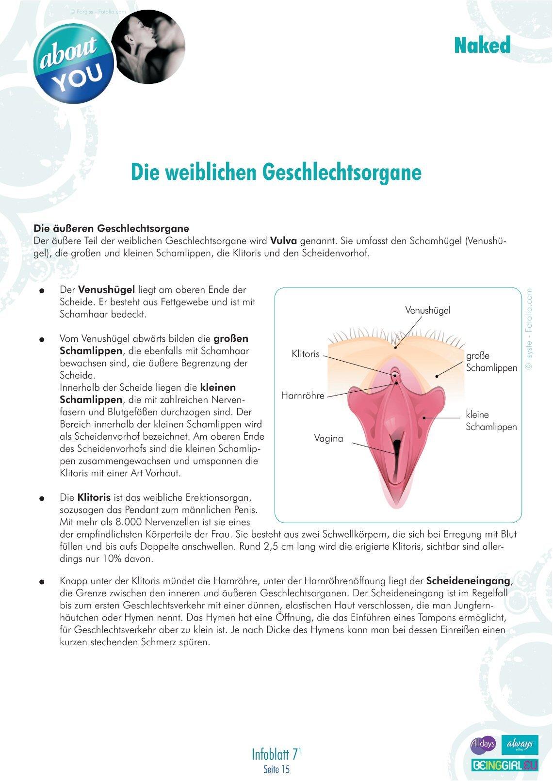 Nett Weibliche Anatomie Vigina Zeitgenössisch - Anatomie Von ...