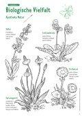 Biologische Vielfalt: Schülerarbeitsheft für die Grundschule - BMU - Seite 7