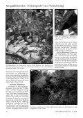 Sensationelle megalithische Nekropole bei ... - Gernot L. Geise - Seite 3
