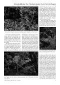 Sensationelle megalithische Nekropole bei ... - Gernot L. Geise - Seite 4