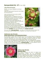 Steingarten   winterhart   robust Delosperma congestum ALBUM Mittagsblümchen