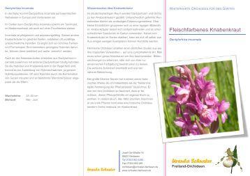 winterharte orchideen f r den garten ursula schuster. Black Bedroom Furniture Sets. Home Design Ideas