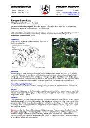 Riesenbärenklau (PDF 515 KB) - Gemeinde Bergün