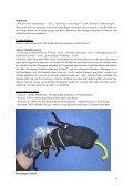 Sumsel, die kleine Wildbiene - Wildbienen in der Umweltbildung - Seite 7
