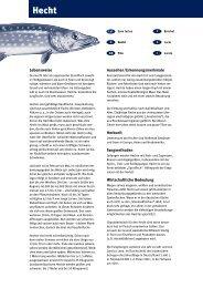 Faktenblatt Hecht - Fisch
