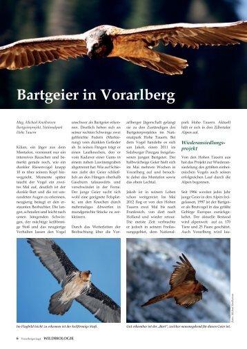 Bartgeier in Vorarlberg - Vorarlberger Jägerschaft