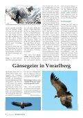 Bartgeier in Vorarlberg - Vorarlberger Jägerschaft - Seite 3