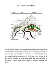 Die Anatomie der Honigbiene - Bienenzuchtverein Sulzbach ...