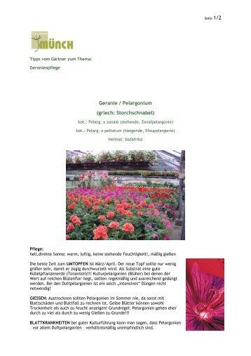 Geranie / Pelargonium (griech: Storchschnabel)