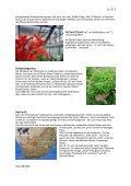 Geranie / Pelargonium (griech: Storchschnabel) - Seite 2