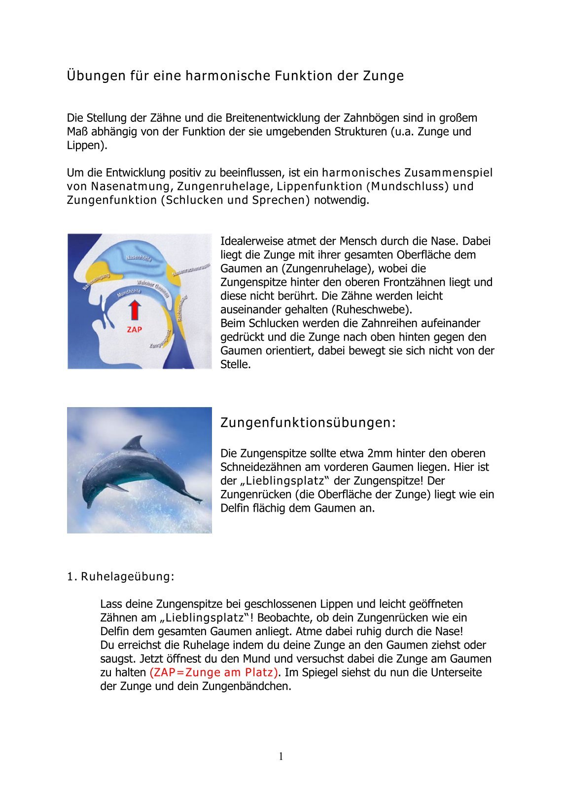 Beste Wo Gaumen Befindet Ideen - Physiologie Von Menschlichen ...