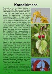 Kornelkirsche - Ökologisch-Botanischer Garten