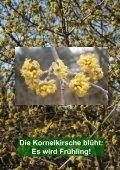 Kornelkirsche - Ökologisch-Botanischer Garten - Seite 2