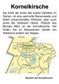 Kornelkirsche - Ökologisch-Botanischer Garten - Seite 3