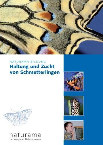 Haltung und Zucht von Schmetterlingen - Naturama