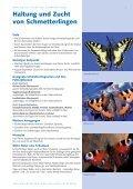 Haltung und Zucht von Schmetterlingen - Naturama - Seite 2