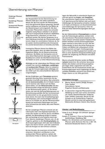 erneuerungsknospen magazine. Black Bedroom Furniture Sets. Home Design Ideas