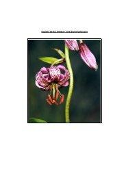 Kapitel 03.02: Blüten- und Samenpflanzen - Hoffmeister.it