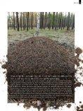 Die mit den Ameisen flüstert - Nagola Re - Seite 5