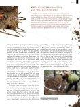 Die mit den Ameisen flüstert - Nagola Re - Seite 7
