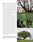Bäume, unsere Leidenschaft– oder wie aus ... - Sabine Mey - Seite 2