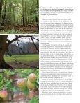 Bäume, unsere Leidenschaft– oder wie aus ... - Sabine Mey - Seite 3