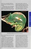 Die Chamäleons Madagaskars - Seite 2