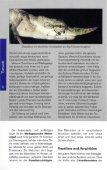 Die Chamäleons Madagaskars - Seite 3