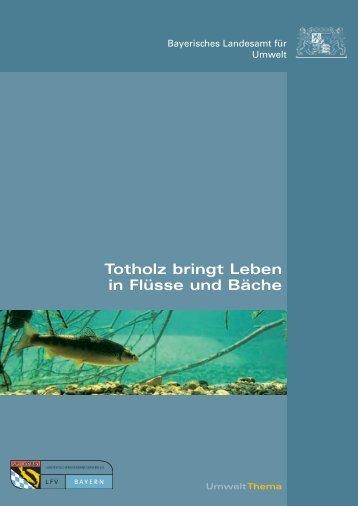 Totholz bringt Leben in Flüsse und Bäche - Die Biberburg