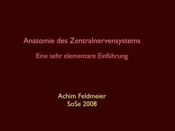 Anatomie des Zentralnervensystems