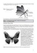 Vielfalt der Schmetterlinge - Naturhistorisches Museum Bern - Page 7