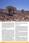 Aloe dichotoma - Köcherbaum - IG-Aloaceae - Seite 6