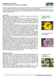 Wildbienen im Portrait - die unscheinbaren Verwandten ... - Bellaflora