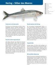 Hering – Silber des Meeres - Fisch