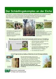 Der Schädlingskomplex an der Eiche - Bayerische Landesanstalt für ...