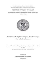 "Transkriptionelle Regulation mitogener ""Immediate early"""