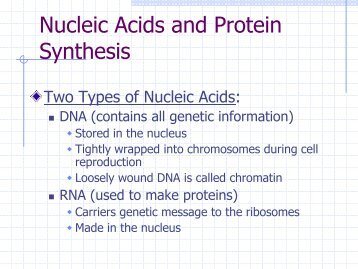 nucleic acids and protein synthesis