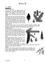 18.05.2008 1.1 Bäume Nadelbäume Tanne (Weisstanne) - Cevi ...