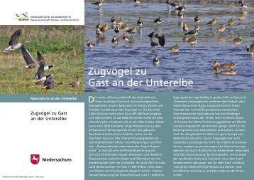 """Faltblatt: """"Zugvögel zu Gast an der Unterelbe"""" - Niedersächsischer ..."""
