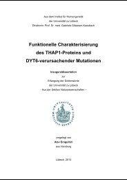 Funktionelle Charakterisierung des THAP1-Proteins und DYT6 ...