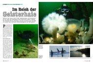 Im Reich der Im Reich der - Rendezvous Dive Adventures
